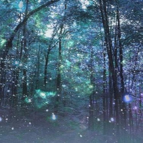 A Night In The Enchanted Forest