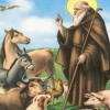 Voghera: buoi e cavalli in piazza per la festa di Sant'Antonio della CRI