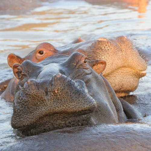 Morning on the Luangwa River, South Luangwa National Park, Zambia (2013-10-22-0089c)
