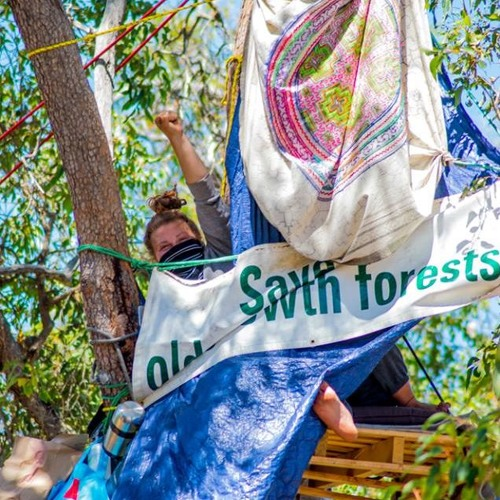 Emma June on her epic tree sit protesting #Roe8 and #NakedforNature