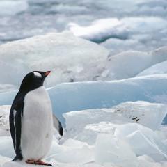 ジェットペンギン
