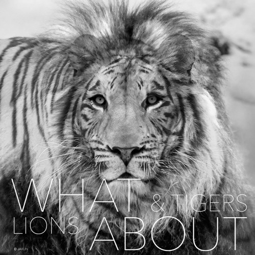 [Demo] What About (Lions & Tigers)