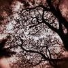 Bawra Mann - Jolly LLB2 - Unplugged