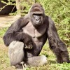 mlg my name is john cena 21 deez nuts harambe lol