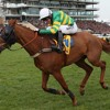 Alan King on Clarence House Chase hopeful Uxizandre