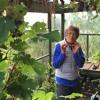 Jennifer Burtt Lauruol - How to hide productive plants in plain view