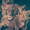 Bruno Mars - 24k Magic - Piano Cover