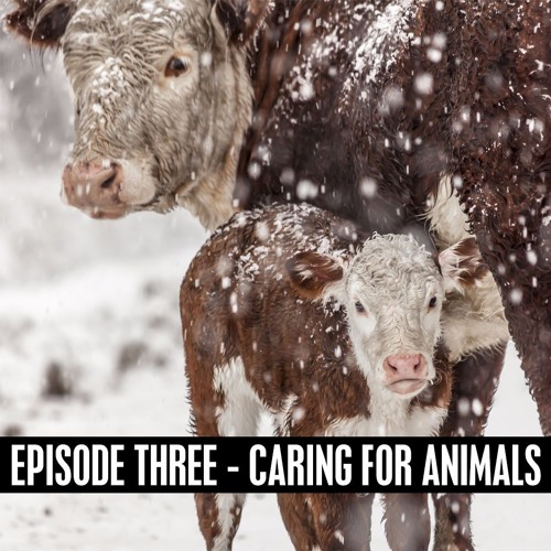 The D&B Show Episode Three - Dave Farris Discusses Cold Weather Livestock Care