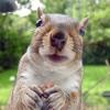 Squirrel.MP3