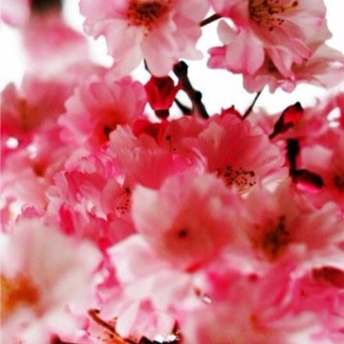 卒業~君と桜と~ Vocal ONE(CeViO)