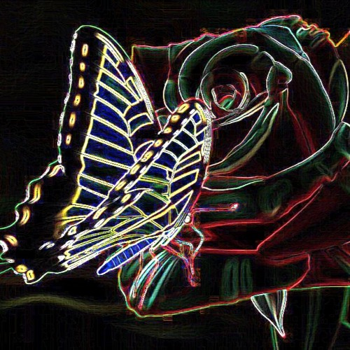 The Rose And The Butterfly