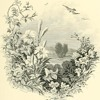Keats Ode To A Nightingale Blough Rough