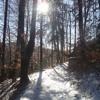 Wintersonne im Buchenwald