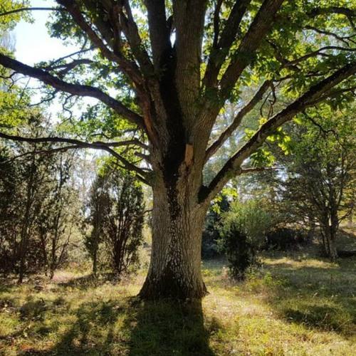 Lars meets a tree