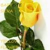 Baptiste Silva - Yellow Flower.mp3