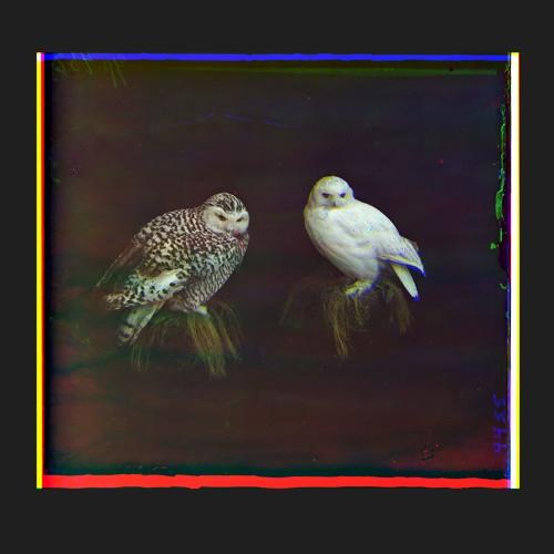 JK's KAMER +50.92509° +03.84800° NIELS VAN HEERTUM (Album Compilation)