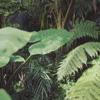 LLOYD GRAND & WHIPPED CREAM - SELVA