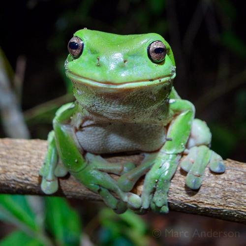 Frog Heaven - Wet Season in Far North Queensland