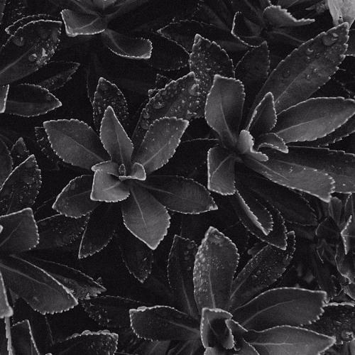 Gene Garrett - Leaf Fall