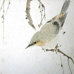 oiseaux métamorphique (2017)