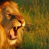 Roar - Logic Fade Away Remix