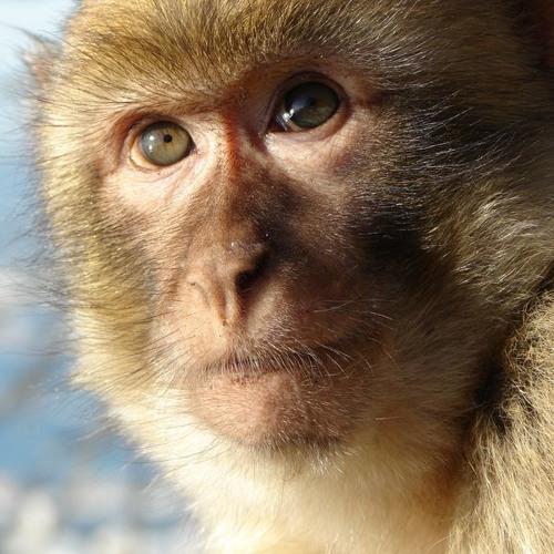 Por qué es crucial impedir una extinción masiva de primates