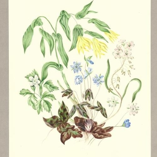 Where Arts Meets Science: Traditions in Canadian Botanical Art - Linda LeGeyt Katz Lecture 2017
