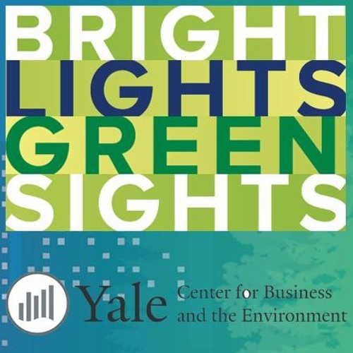 Bright Lights Green Sights: A conversation with Sharon Rowe, Eco-Bags Products