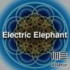 Ableton Live EDM Template - Electric Elephant By EdwardSouth