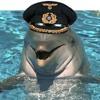 dolphinseason