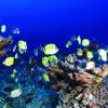 Dawn Chorus Of Reef Fish