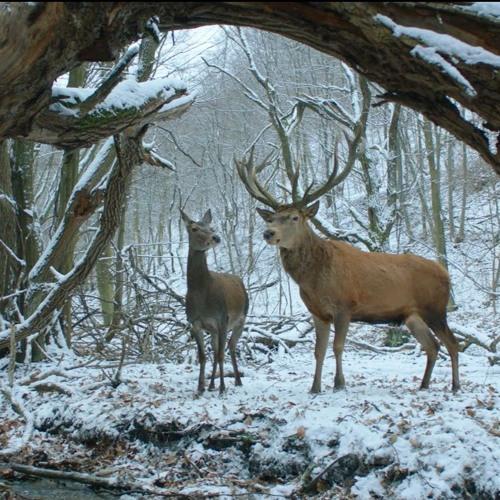 Berlinale 2017 - Golden Bear to On Body & Soul