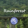 Cour - Rainforest