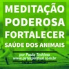 Meditação Poderosa Transformadora Para Fortalecer a Saúde do seu Pet