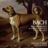 BACH // Violin Sonata No. 3 in E Major, BWV 1016: IV. Allegro