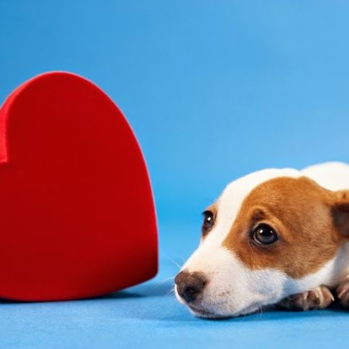 1 - 28 - 17  #2y Heartworm Prevention