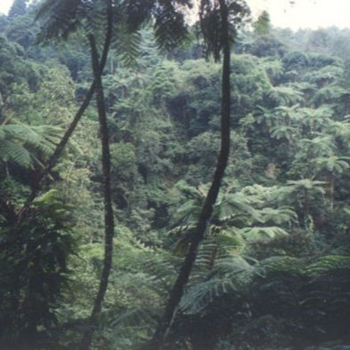 Jungle Jakarta