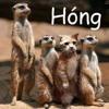 Download Chúng Ta Dừng Lại Ở Đây Thôi - Nguyễn Đình Vũ Mp3