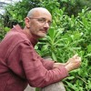 Tomas Remiarz - get inspired by the largest review of forest gardens in temperate climate