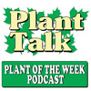 Plant Of The Week - POTW3 -  Iris & White Fringe Tree
