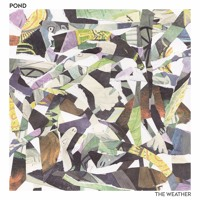 POND - The Weather