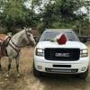 Los Plebes Del Rancho  -   ¿Como Fue_      (Disco Nuevo 2017).m4a Portada del disco