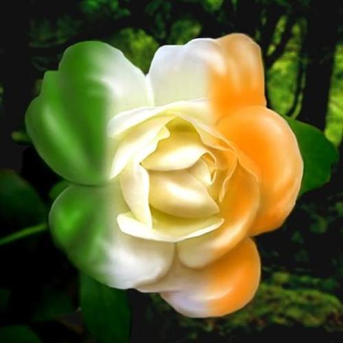 Irish Rose by Stacie Eirich