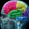 "Dog Sticks - Fixing My Brain (7"" mix)"
