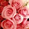 Download NHK連続テレビ小説「とと姉ちゃん」より宇多田ヒカルさんの大好きな曲、「花束を君に」です。お聴き下さい❤️