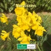 Narzissen from kaiser-musix =====> free Download!