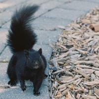Animal (Photographer Remix)