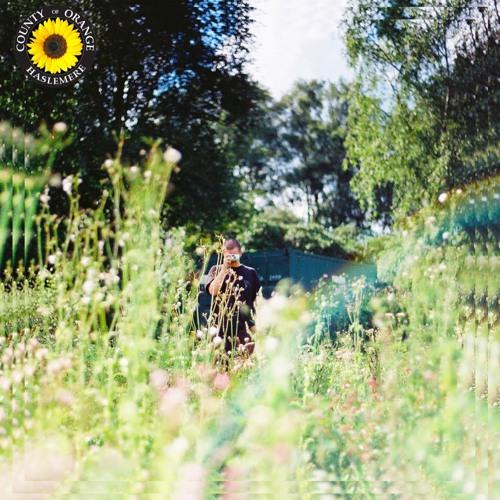 Rex Orange County - Sunflower