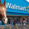 Riding A Horse In Walmart - Dallas & Brenda LOL 931 Coast Country Daytona Beach FL