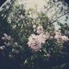 True Colors - Cindy Lauper /  piano